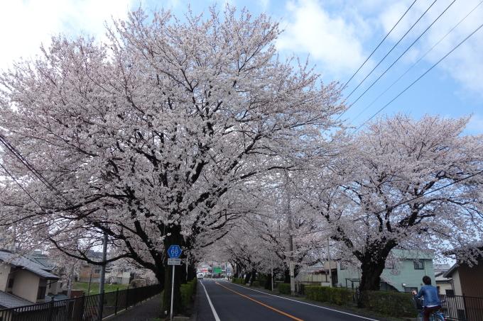 桜0001.JPG