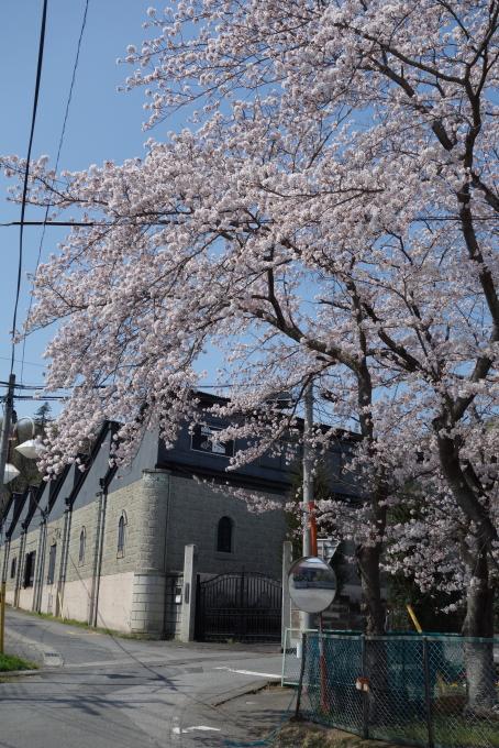 桜晴れ1.JPG